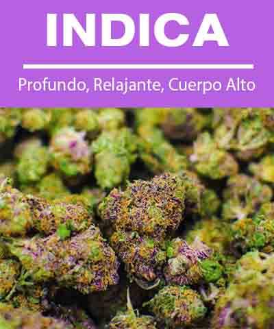 descripción e imagen de la flor de cannabis indica