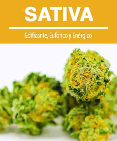 descripción e imagen de la flor de cannabis sativa